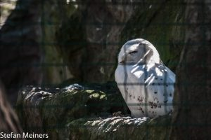 Hinter Gittern - der Vogelknast
